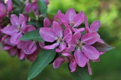 Rosa färgblomning Arkivfoton