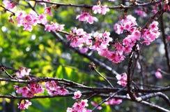 rosa färgblomning i trädgården Arkivbild