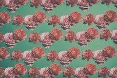Rosa rosa färgblomning som dånar pattermtappning arkivfoto