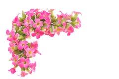 Rosa färgblomninggräns Arkivbilder