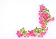 Rosa färgblomninggräns Arkivfoton