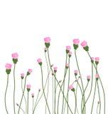 Rosa färgblomningtapet Arkivbild