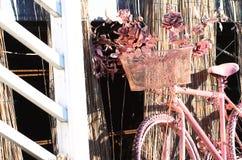 Rosa färgcykel Fotografering för Bildbyråer