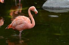 Rosa färgen är egentligen min favorit- färg Royaltyfri Fotografi