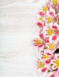 Rosa färgen blommar Alstroemeria på ljus bakgrund Arkivbild