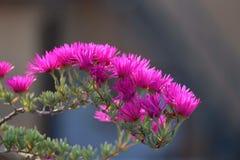 rosa färgen blommar i en solig dag Royaltyfri Bild