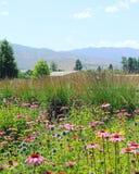 Rosa färgen blommar i fält Fotografering för Bildbyråer