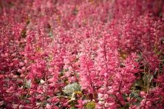 Rosa färgen blommar i gräsmattan royaltyfria bilder
