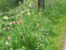 Rosa färgen blommar i gräsplan Royaltyfri Bild