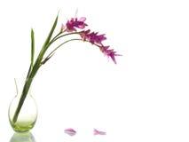 Rosa färgen blommar i grön vas Arkivfoto