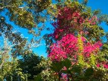 Rosa färgen blommar i morgonen 02 Arkivfoton
