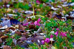 Rosa färgen blommar i skog royaltyfria bilder