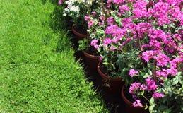 Rosa färgen blommar med ängen fotografering för bildbyråer
