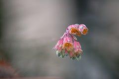 Rosa färgen blommar med mjuk bakgrund royaltyfri bild