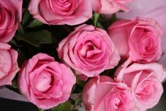 Rosa färgen blommar nära skott Royaltyfria Foton