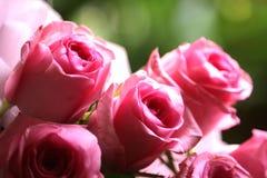 Rosa färgen blommar nära skott Arkivfoton