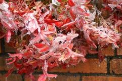 Rosa färgen blommar på en tegelstenvägg Royaltyfri Fotografi