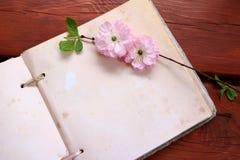 Rosa färgen blommar på en tom sida royaltyfri bild