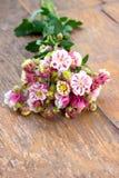 Rosa färgen blommar på träsurfasen Royaltyfri Foto