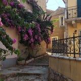 Rosa färgen blommar på väggen Royaltyfria Foton