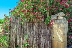 Rosa färgen blommar runt om staketet i Malta Royaltyfria Bilder