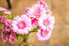 Rosa färgen blommar upp begravnings- kransslut Royaltyfri Bild