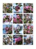 Rosa färgen blomstrar collage Royaltyfria Foton