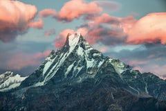 Rosa färgen fördunklar över Machapuchare, Annapurna, Nepal Arkivfoton