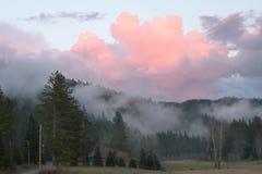 Rosa färgen fördunklar stigning över norr Idaho berg i vår, arkivfoton