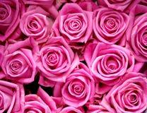 Rosa färgen väcker bakgrund Arkivbilder