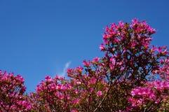 Rosa färger arkivbild