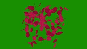 Rosa färger av roskronblad in i hjärta-formad fluga ifrån varandra med den alfabetiska kanalen vektor illustrationer