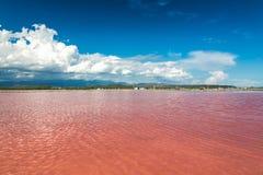 Rosa färger bevattnar den salta sjön i Dominikanska republiken Royaltyfria Foton
