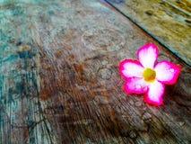 Rosa färger blommar den pålagda tabellen Arkivfoto