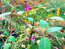 Rosa färger blommar i en röjning i höstskogen arkivfoton