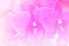 Rosa färger blommar ljus bakgrund Arkivbilder