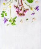 Rosa färger, lila och gula vår- eller sommarträdgårdblommor och växter på ljus träbakgrund Arkivfoto