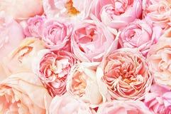 Rosa färger och aprikons steg blommabukettbakgrund royaltyfri fotografi
