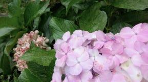 Rosa färger och gräsplan Arkivfoto