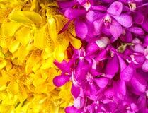 Rosa färger och guling Arkivbilder