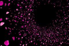 Rosa färger och rosa kronblad för violet som flyger med virvel på svart bakgrunds-, förälskelse- och valentindag Arkivfoton