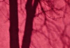 Rosa färger rappade väggen med skugga av träd som faller på den Royaltyfri Foto