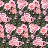 Rosa färger steg bakgrund för textur för modellen för naturen för sommar för gräs för blommaträdgården sömlös arkivbilder