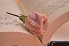 Rosa färger steg blomman på boken i arkivromansboken för kultur för universitet arkivbild