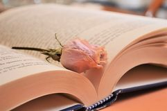 Rosa färger steg blomman på boken i arkivromansboken för kultur för universitet arkivbilder