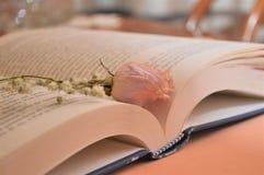 Rosa färger steg blomman på boken i arkivromansboken för kultur för universitet royaltyfri foto