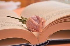 Rosa färger steg blomman på boken i arkivromansboken för kultur för universitet arkivfoto