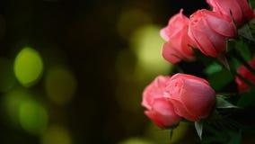 Rosa färger steg guld- bokeh för blommahdlängd i fot räknat