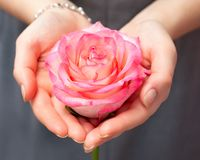Rosa färger steg i händerna av gummin som rosa färger steg i händerna av en flicka härliga händer En gåva till din älskling arkivbild