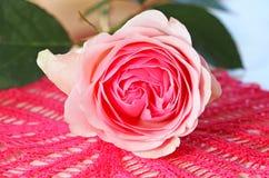 Rosa färger steg på en stucken servett royaltyfria foton